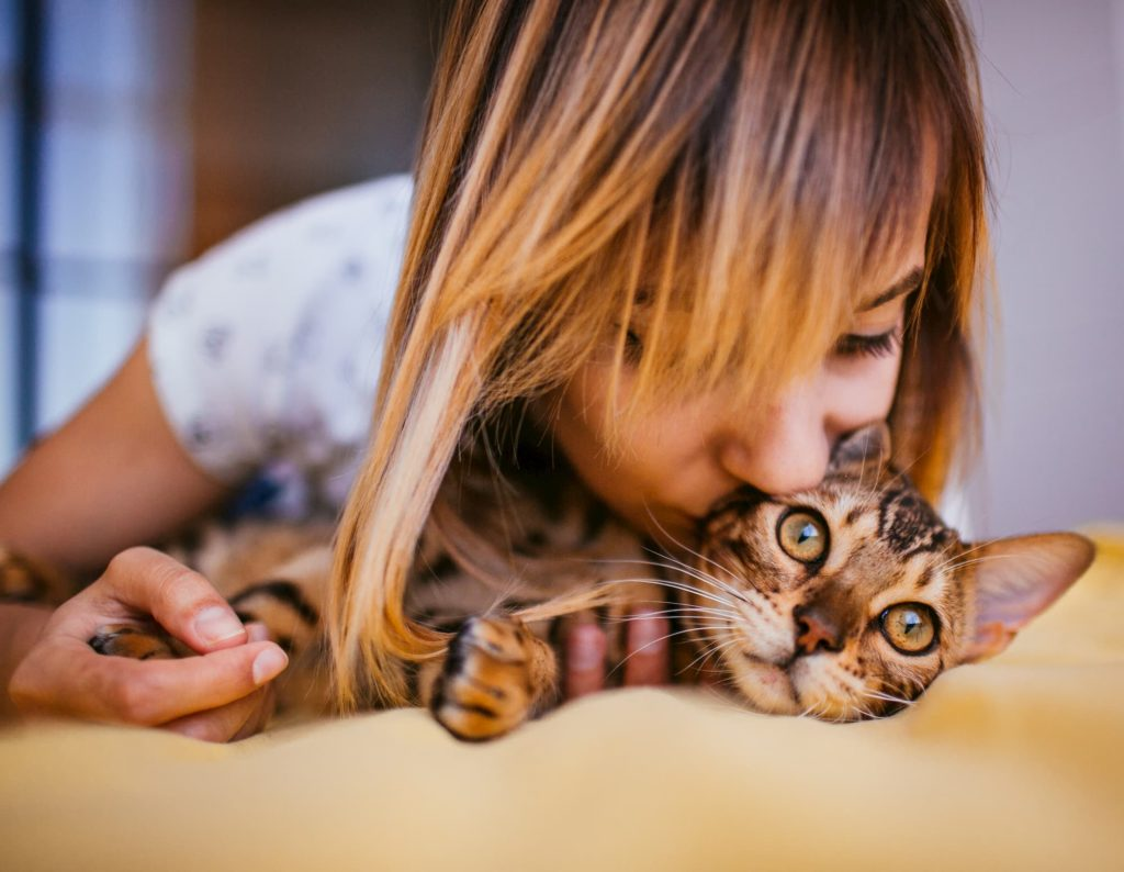 Bengal cat being hugged and kissed