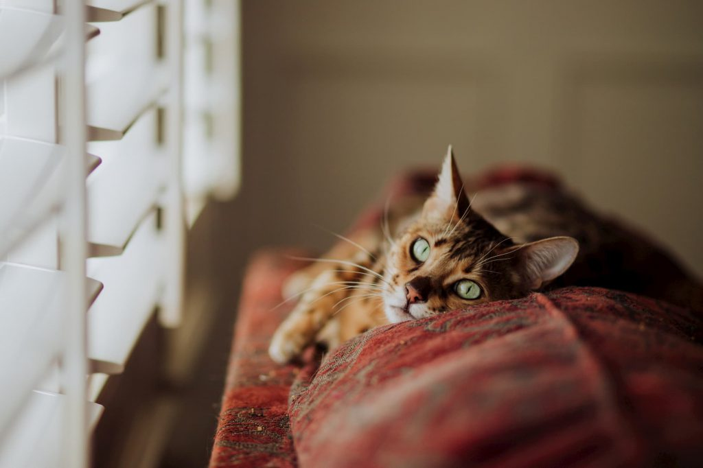 lonely cat, Lonely cat? What can I do to make my cat feel less lonely?
