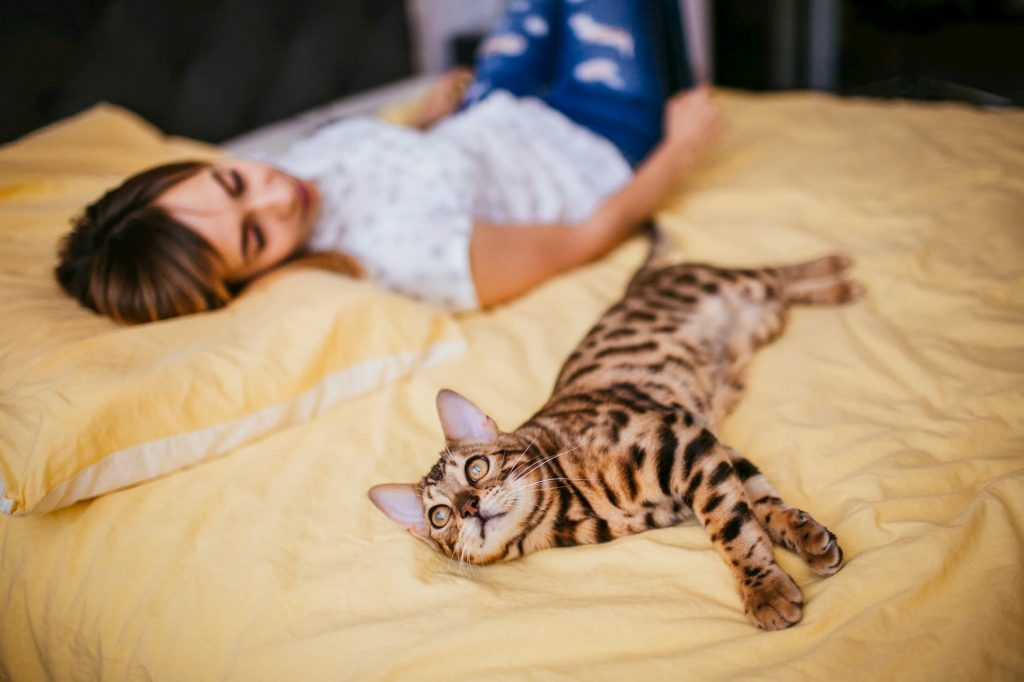 Bengal cat and woman laying in bed