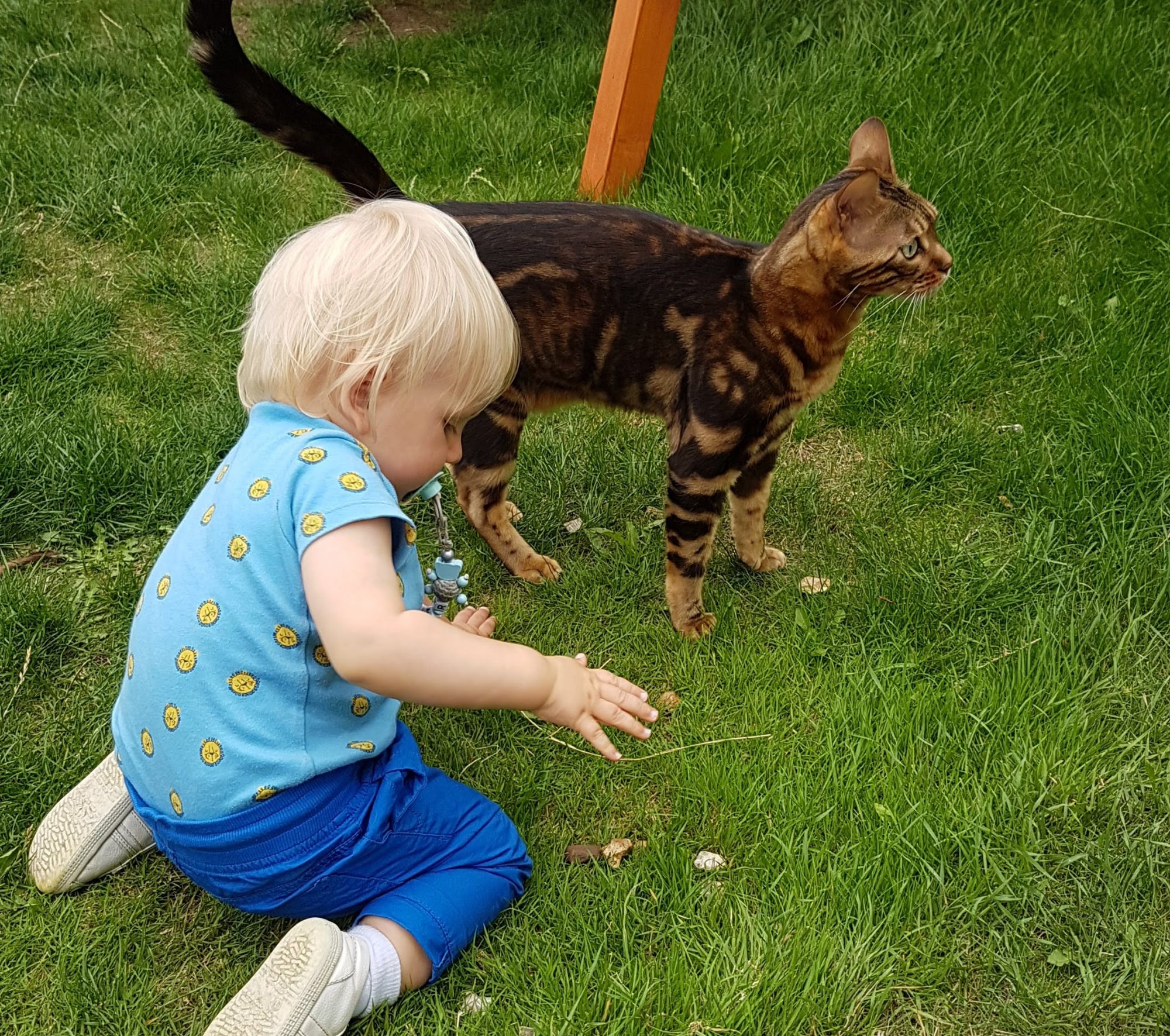 Are Bengal Cats Good With Kids A Guide For Parents