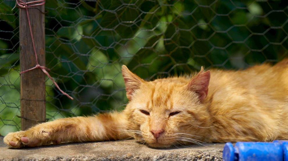 Ginger cat sleeping and stretching outside next to the fence