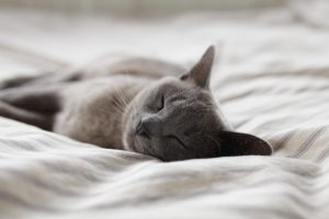 Gray cat laying on duvet