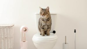 Cat sat on a toilet with toilet roll