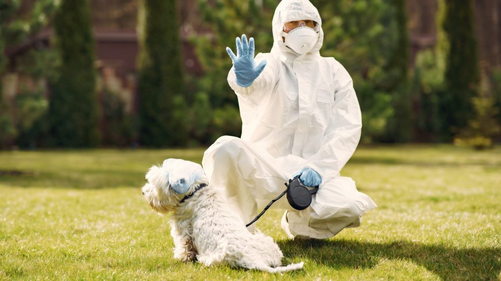 Dog walker in hazmat suit covid-19