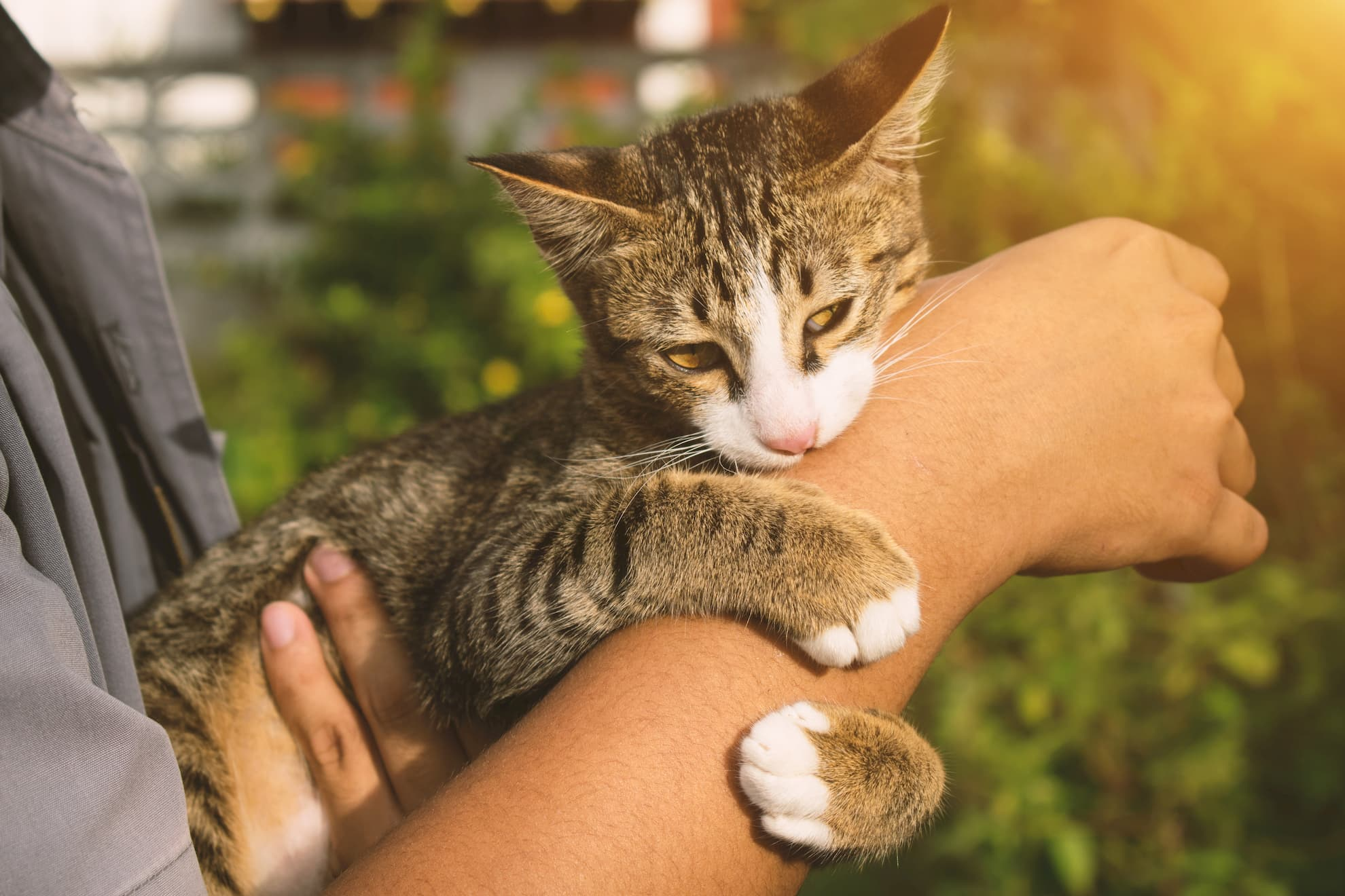 Stop cat from biting you. Reasons why cats bite and how to end it NOW