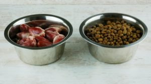 raw vs dry food for cats